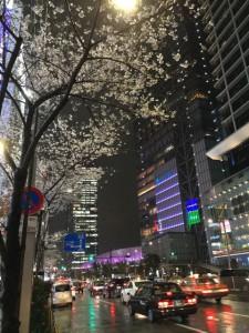 東京駅桜2016
