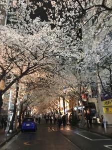 八重洲桜2016